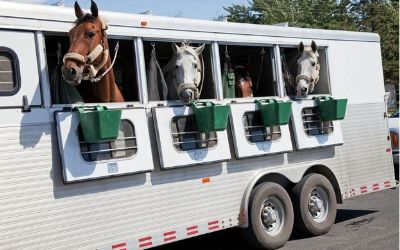 Traveling with Horses in the Heat