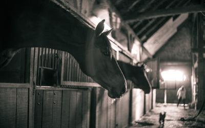 Equine Liability Insurance